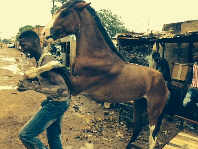 A brown horse has his front legs resting on the shoulders of a young African man