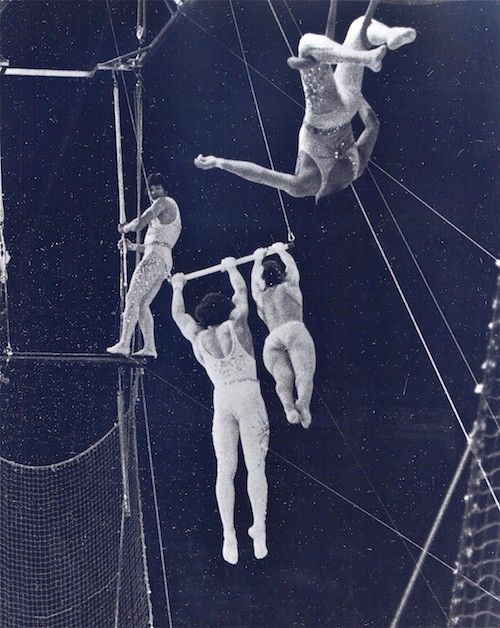The trapeze artists brothers in a grainy black and white photo. One is standing on the bar of his trapeze and the other two are swinging from theirs.