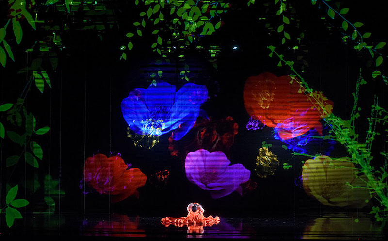 A projection of brightly colored poppies illuminate the stage