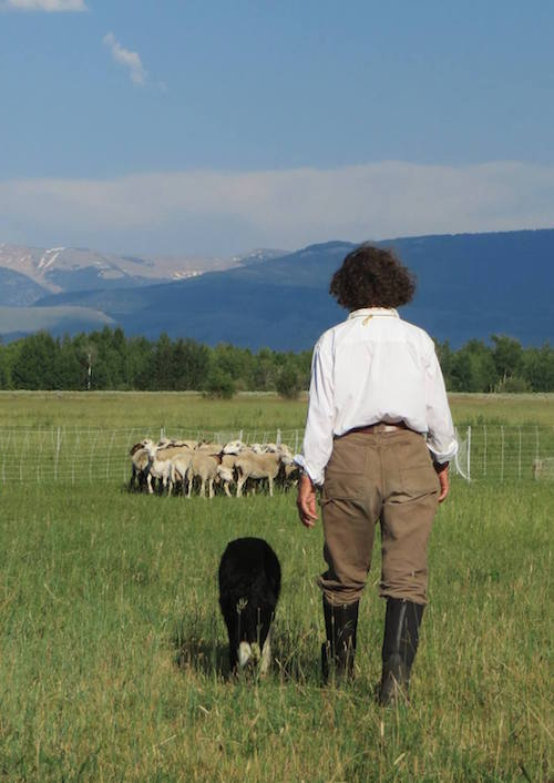 A woman in riding boots and trousers stands next to a dog with her back to the camera. They face a flock of sheep and the Wyoming mountainside.
